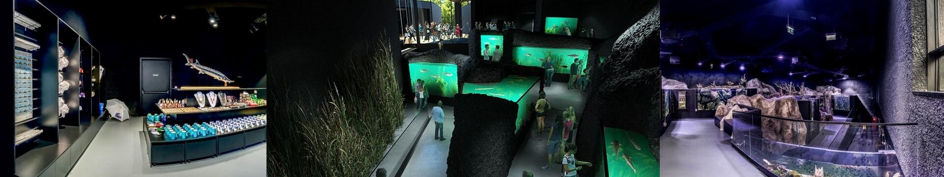 Aquatika – Freshwater aquarium