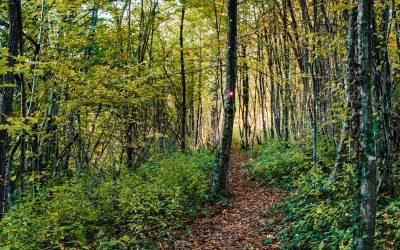 Staze za pješačenje & Boravak u prirodi